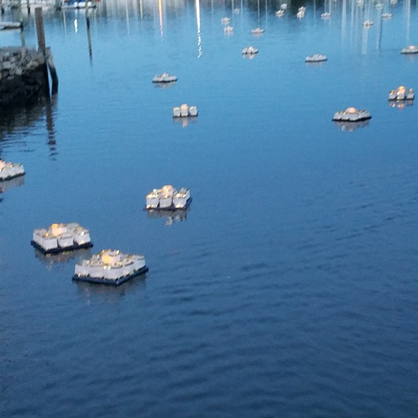 Wickford-Harbour-Lights-1